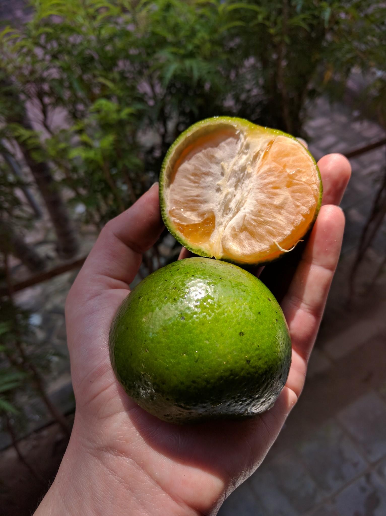 Bali orange